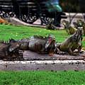 Iguana Trio by Catherine Sherman