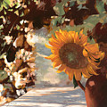 Il Girasole by Guido Borelli