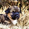 I'll Be Doggone by Karen Scovill