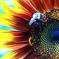 I'll Bee There by Vijay Sharon Govender