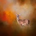 Illuminated By The Autumn Light by Jai Johnson