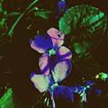 Illuminated Wildflowers by Paul Kercher