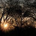 Illuminating Through Trees  by Megan Miller