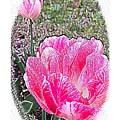 Illustrated Rose Vignette by Barbara Griffin