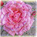 Illustration Rose Pink by Barbara Griffin