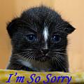 I'm So Sorry Greeting Card by Bob Johnson