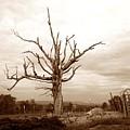 Fantastic Tree by John Myers