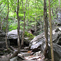 Image Included In Queen The Novel - Rocks At Smugglers Notch by Felipe Adan Lerma