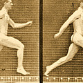 Image Sequence From Animal Locomotion Series by Eadweard Muybridge