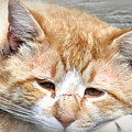 Img_0001 Cat by Travis Truelove