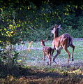 Img_0461-020 - White-tail Deer by Travis Truelove