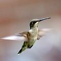 Img_3085 - Ruby-throated Hummingbird by Travis Truelove