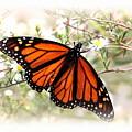 Img_5290-004 - Butterfly by Travis Truelove