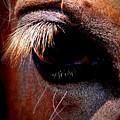 Img_9984 - Horse by Travis Truelove
