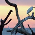 Immature Heron Glow by Robert Loe