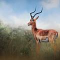 Impala by Maria Coulson