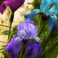 Impossible Irises by Mindy Sommers