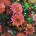 Bronze And Pink Mums by Sand And Chi