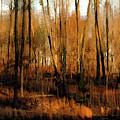 Impressionist Autumn Landscape Reflection 7314 Idp_3 by Steven Ward