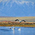 Impressionist Pelicans And Peaks by Greg Norrell
