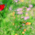 Impressionistic Blossom 5 At Britain Park by Dubi Roman
