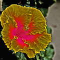 Impressionistic Hibiscus Yellow And Red  by David Frederick