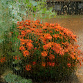 Impressionistic Mums by Don Schroder
