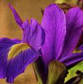 Impressionistic Purple Iris  by Dave Bosse