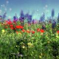Impressionistic Springtime by Dubi Roman