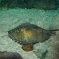 Impressionistic Sting Ray - 003 by Dave Stubblefield