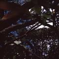 In A Brazilian Forest by Patrick Klauss