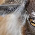 In A Goat's Eye by Christina McKinney