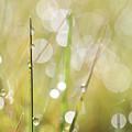 In A Meadow by Jana Behr