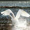 In A Splash by Karol Livote