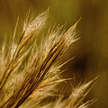 In An Autumn Field - Golden Macro by Mitch Spence