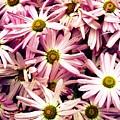 In Bloom by Brittini Rinehart