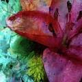 In Bloom by Jamie Holbrook