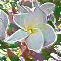 In Bloom by Vicki Lynn Sodora