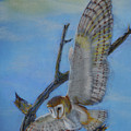 In Flight Barn Owl by Lance Sheridan-Peel