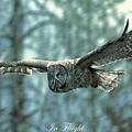 In Flight by David  Hicks