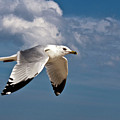 In Flight by Donna Walsh