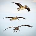 In Flight by Marilee Noland
