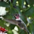 In Flight Meal by Rhiannon Amaya