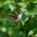 In Flight by Sandy Keeton