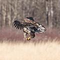 In Flight Snack by Paul Freidlund