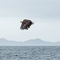 In Flight by Tom Rostron