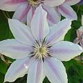 In Full Bloom by Michele Enli