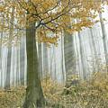 In Mist 1 by Michal Gulas