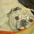 In My Dog Bed by Shari Wilder