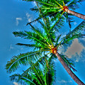 In Palms View by Steve Cole